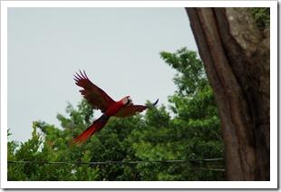 Costa Rica 2012-10-20 003
