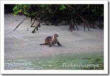 Galapagos 2013-04-08 091